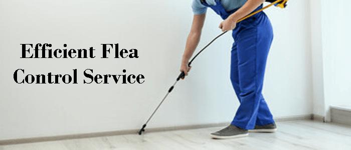 Efficient Flea Control Service