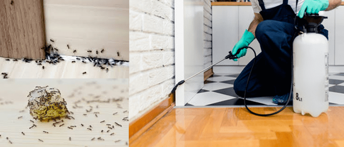 Reliable Ant Control Professional Services