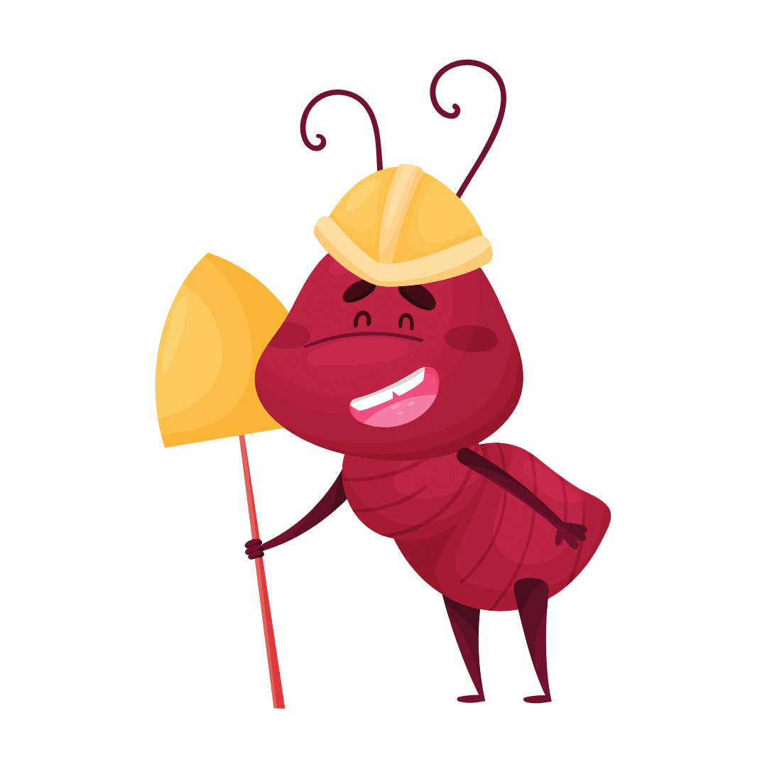 Termite Control Botany